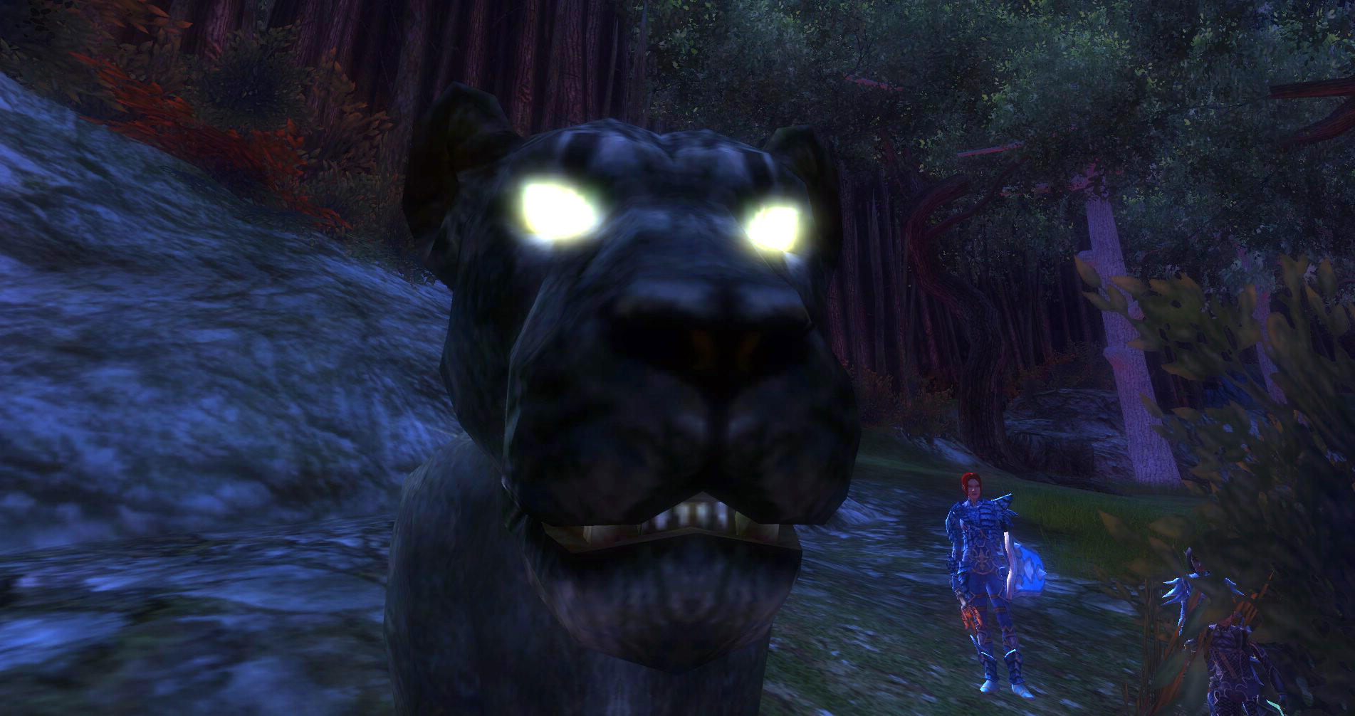 ddmsrealm-ddo-the-kings-forest-meow